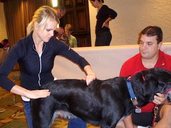 dog_chiropractic