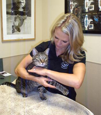 chiropractic_cats